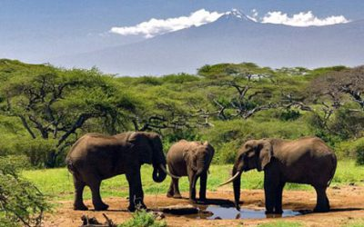 National Parks in Ethiopia